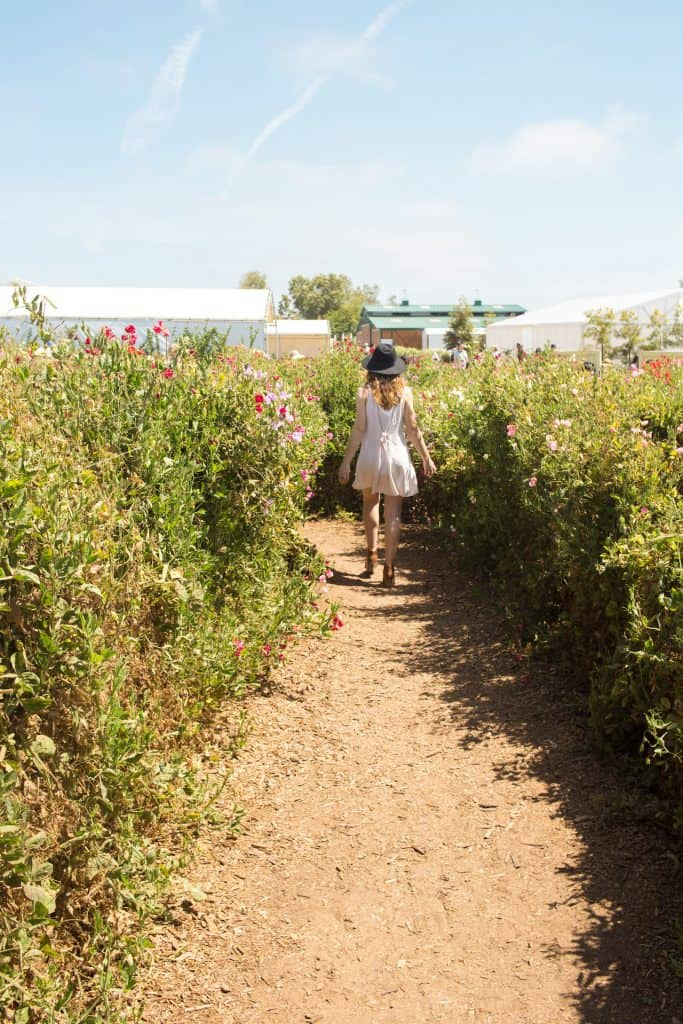 Flower-Fields-Carlsbad