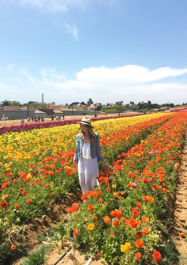 Flower-Fields-Carlsbad