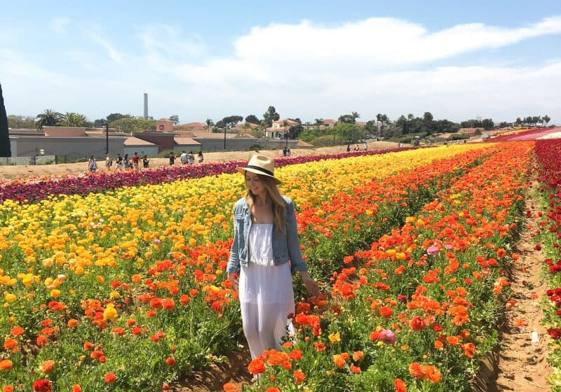 Exploring the Flower Fields at Carlsbad Ranch