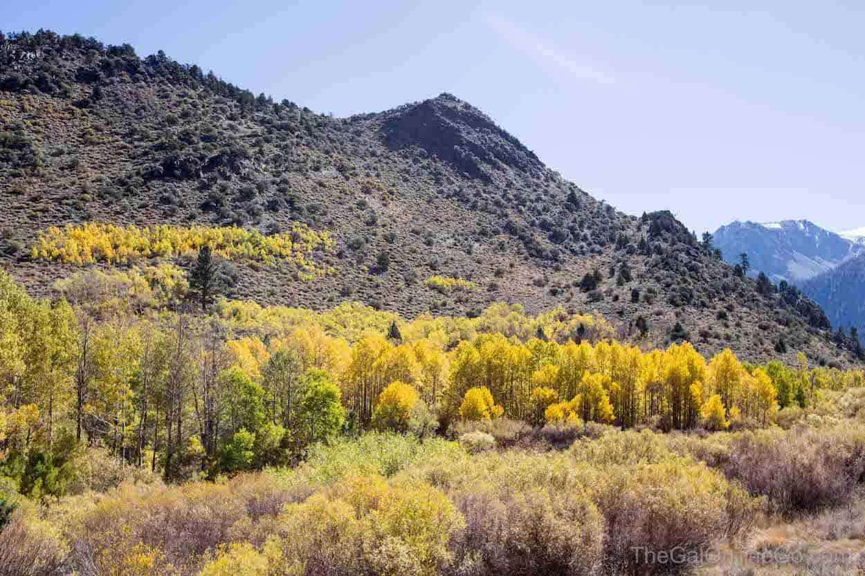 Fall Colors June Lake Loop California